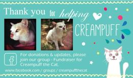 In support of Fundraising for Creampuff the Cat